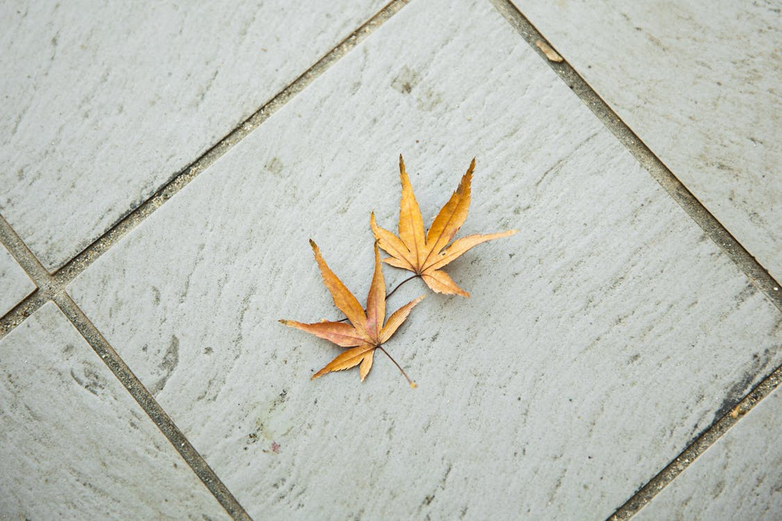 Top view of dry weathered brown maple leaves with pointed edges placed on tiled floor in light room in autumn time