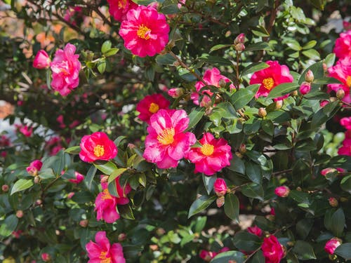 Ảnh lưu trữ miễn phí về ánh sáng mặt trời, bụi cây, cánh hoa
