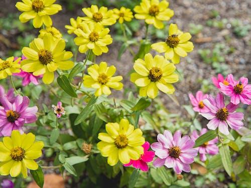 Foto profissional grátis de abundância, amarelo, arbusto