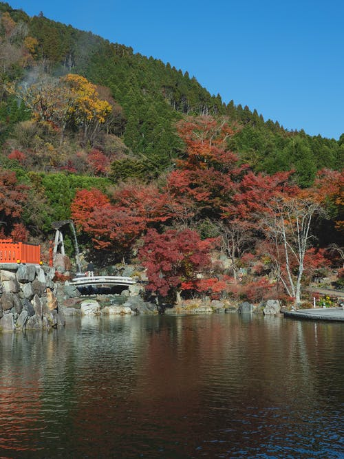 Photos gratuites de à feuilles caduques, aquarelle, arbre