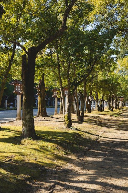 充滿活力, 光線, 公園 的 免費圖庫相片