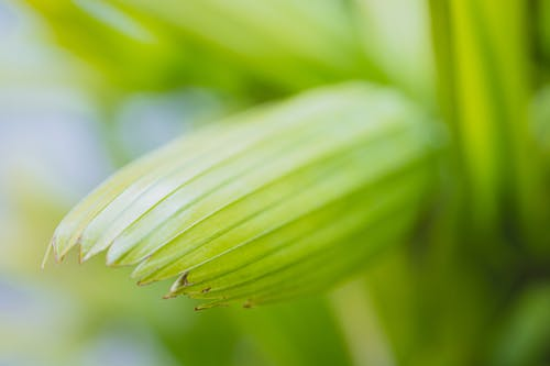 Fresh verdant textured leaf of plant in garden