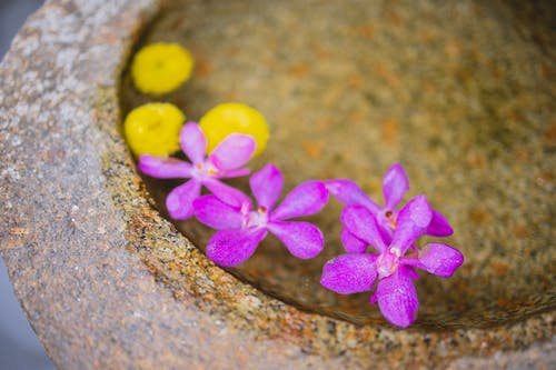 From above of crystal clean transparent water with purple gentle orchid and bright yellow flowers