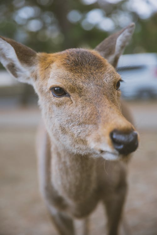 Cute little roe deer standing in lush summer natural park and looking at camera attentively
