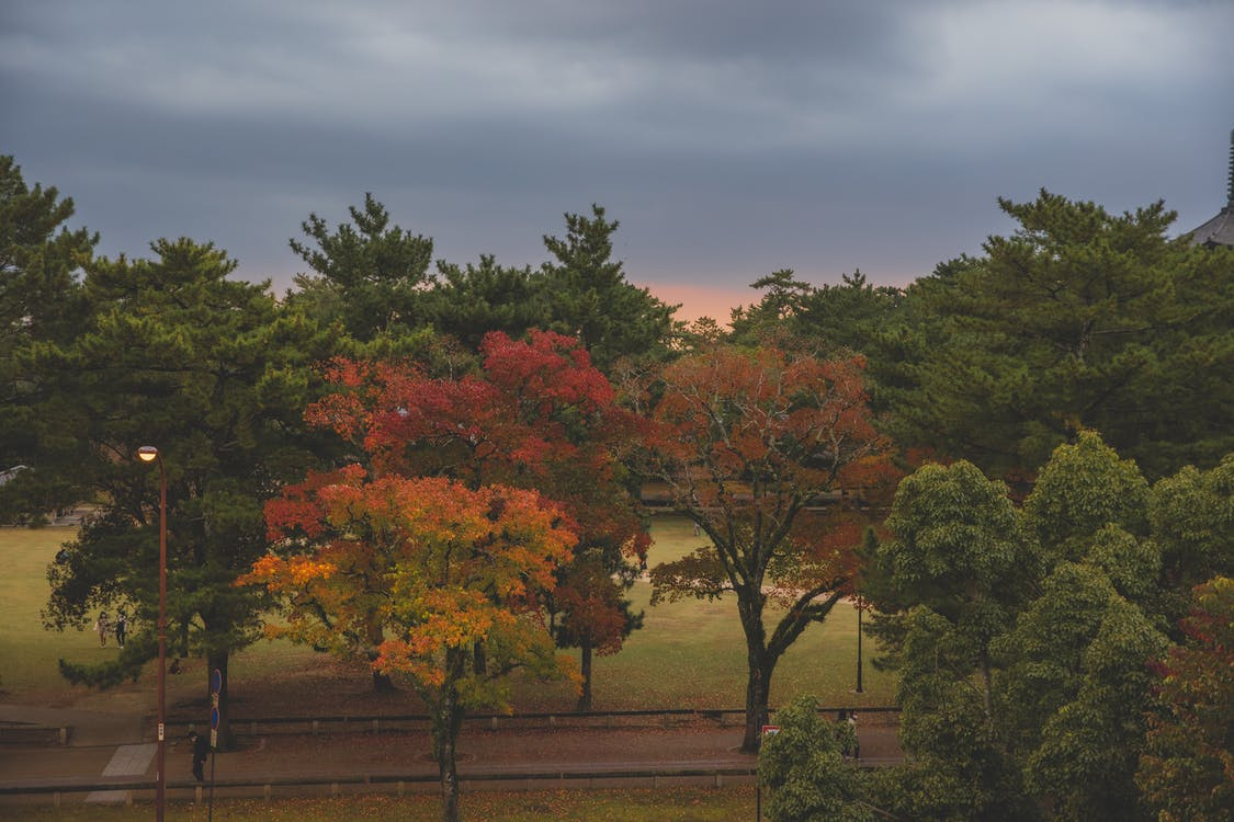 Autumn trees growing in park under cloudy sky