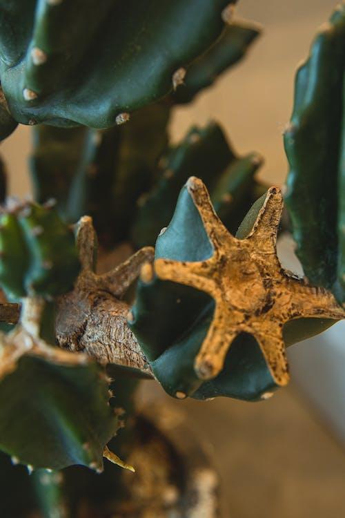 Decorative cactus Cereus peruvianus in pot