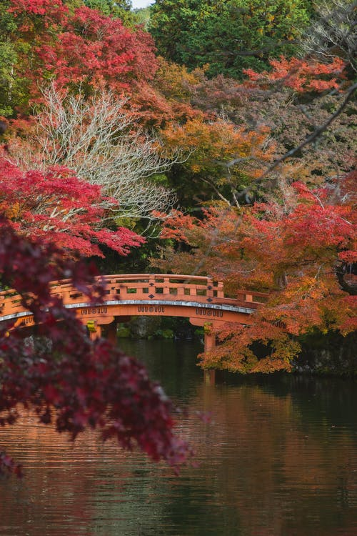 Picturesque scenery of wooden bridge over calm river with rippling water surface in fall woods in Japan