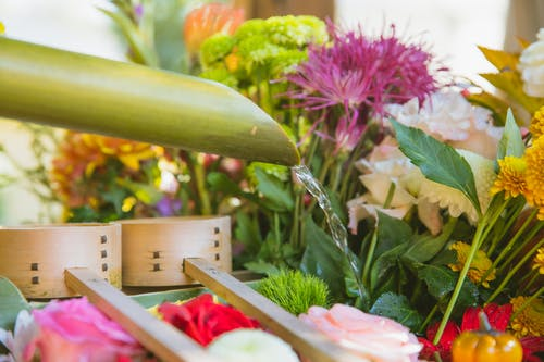 Watering bright colorful blossoming flowers with green leaves and thin stems in floral shop
