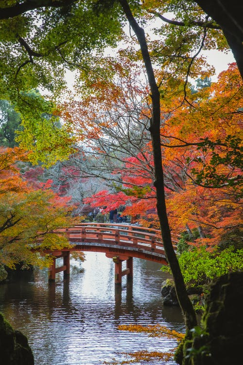 Arched footbridge over calm lake in peaceful autumn garden in south eastern style