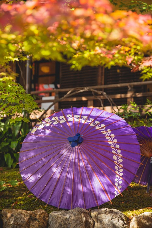 Bamboo and lilac oiled paper Japanese handmade umbrellas in garden with bright trees