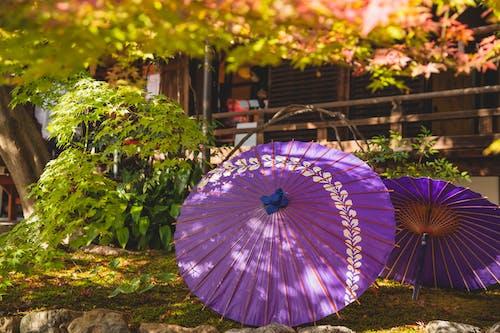 Lilac umbrella in garden near house