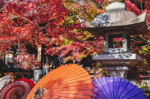 Traditional Japanese lantern in garden with maple trees and paper colourful umbrellas in sunny day