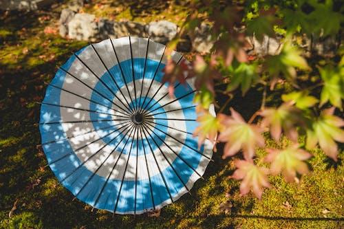 Imagine de stoc gratuită din afară, alb, albastru