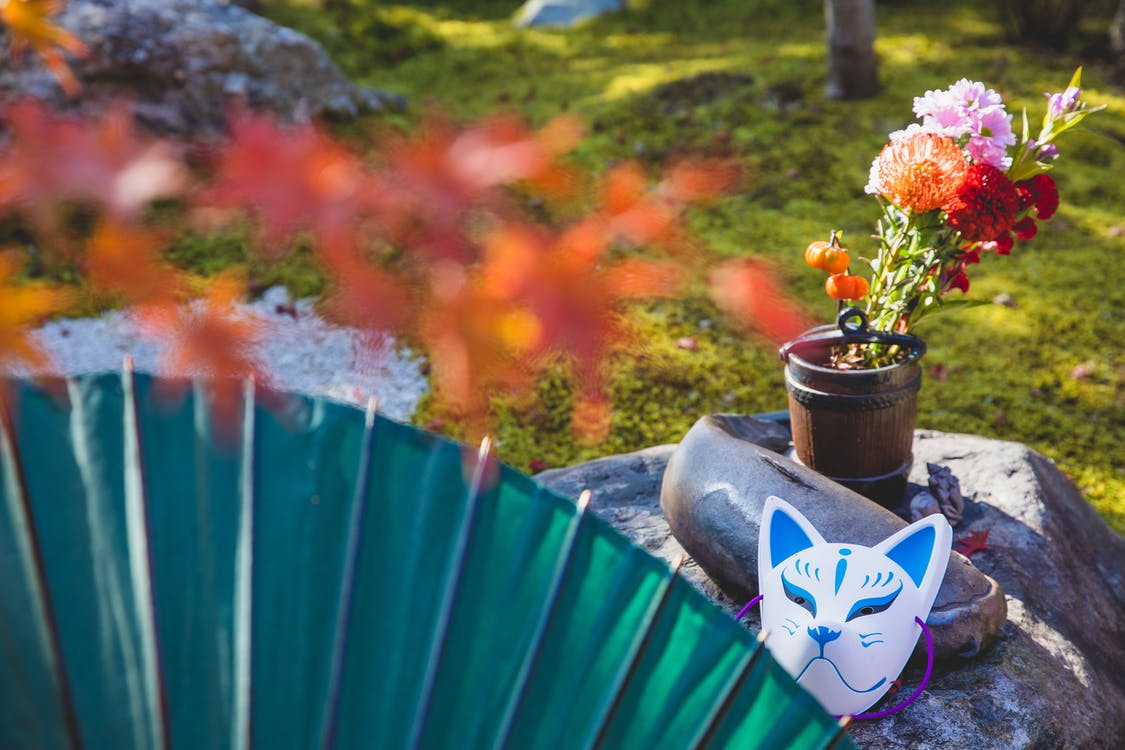 Photos gratuites de arbre, automne, bleu