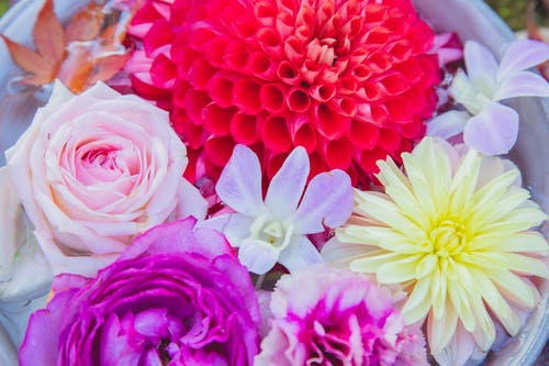From above of big pot with blossoming red and yellow dahlias with purple peonies and orchid near pink rose flowers in water with red leafs in daylight