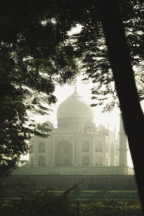 Taja Mahal through a Tree Branch