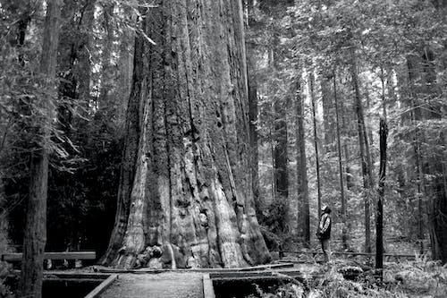 Foto stok gratis barbar, batang pohon, berpikir