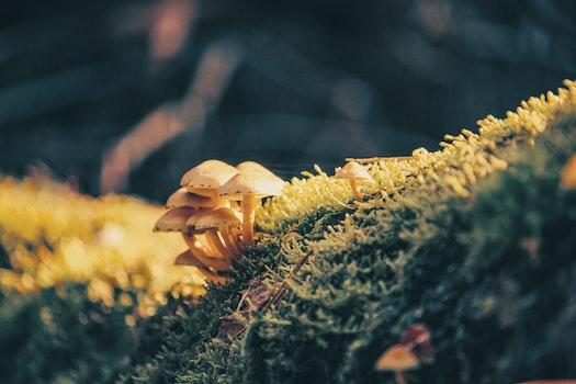 Free stock photo of light, moss, blur, autumn