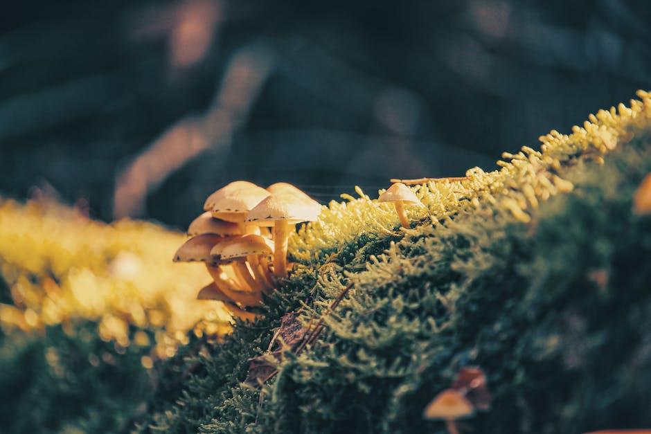 New free stock photo of light, moss, blur