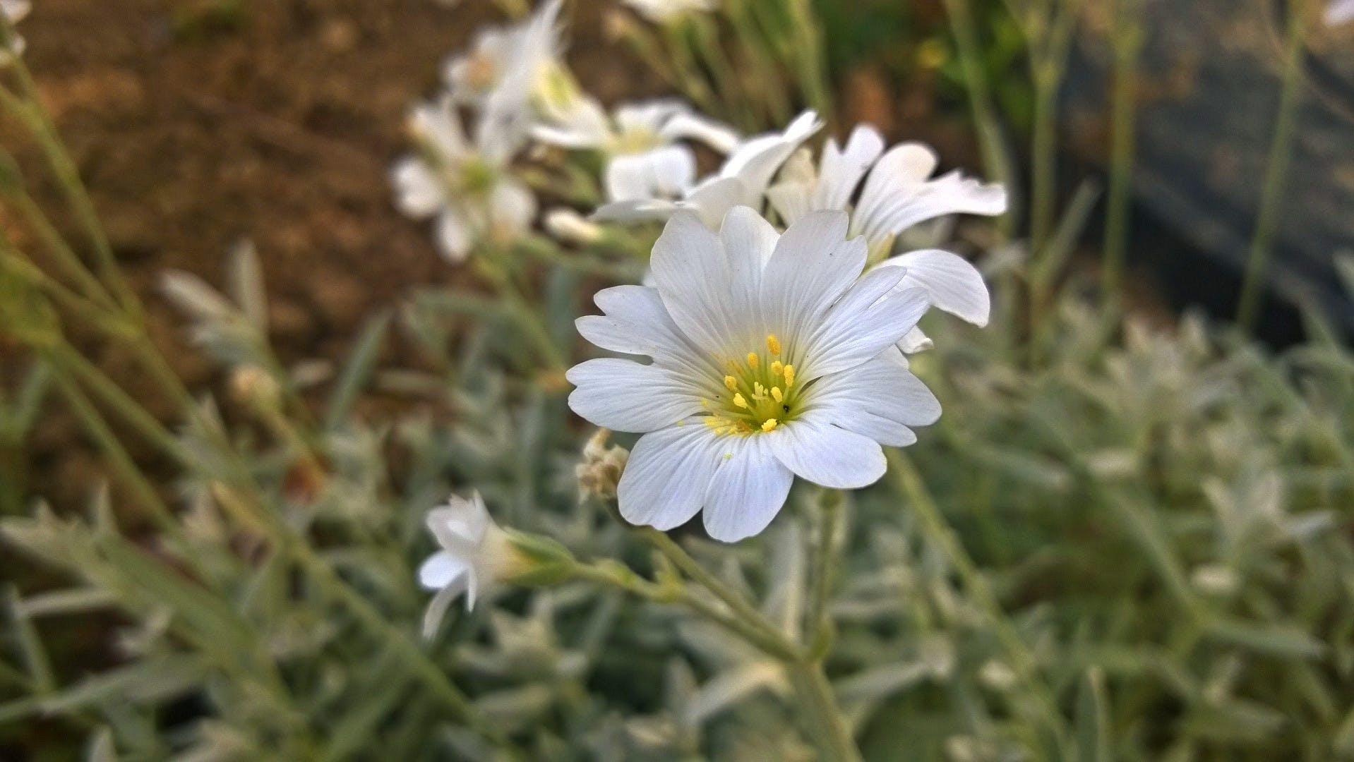 White Flower Beside Chop Wood
