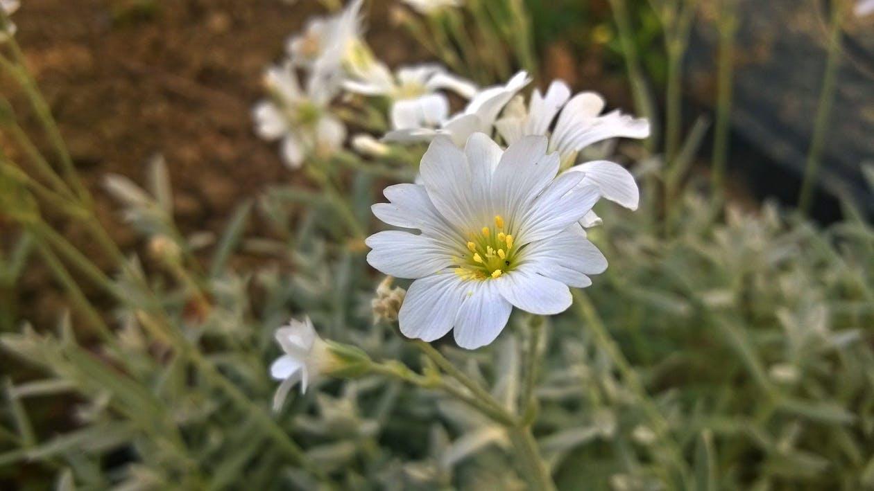bane, blomst, blomstermotiv