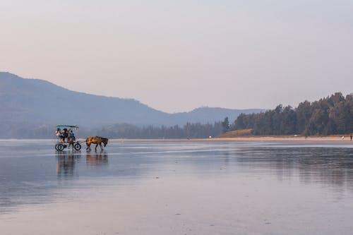 People Riding Horses on Lake
