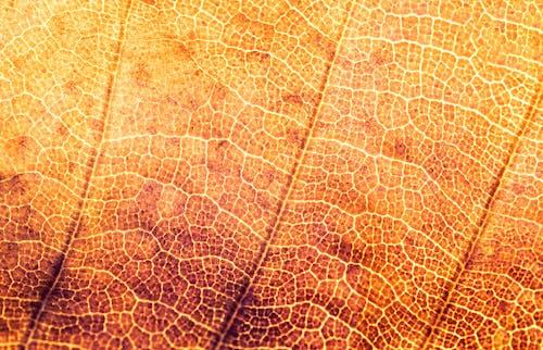 Darmowe zdjęcie z galerii z struktura, struktury, tekstura, tło