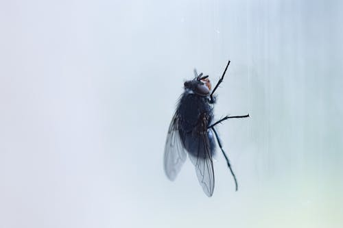 Black fly sitting on window