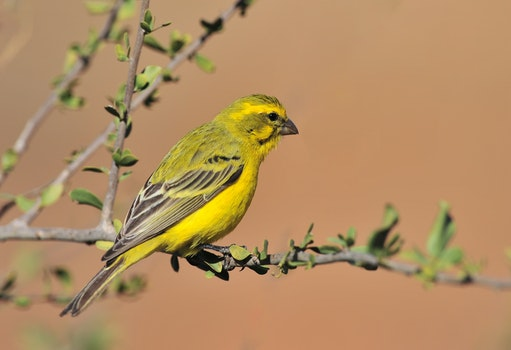 Free stock photo of nature, bird, animal, branches