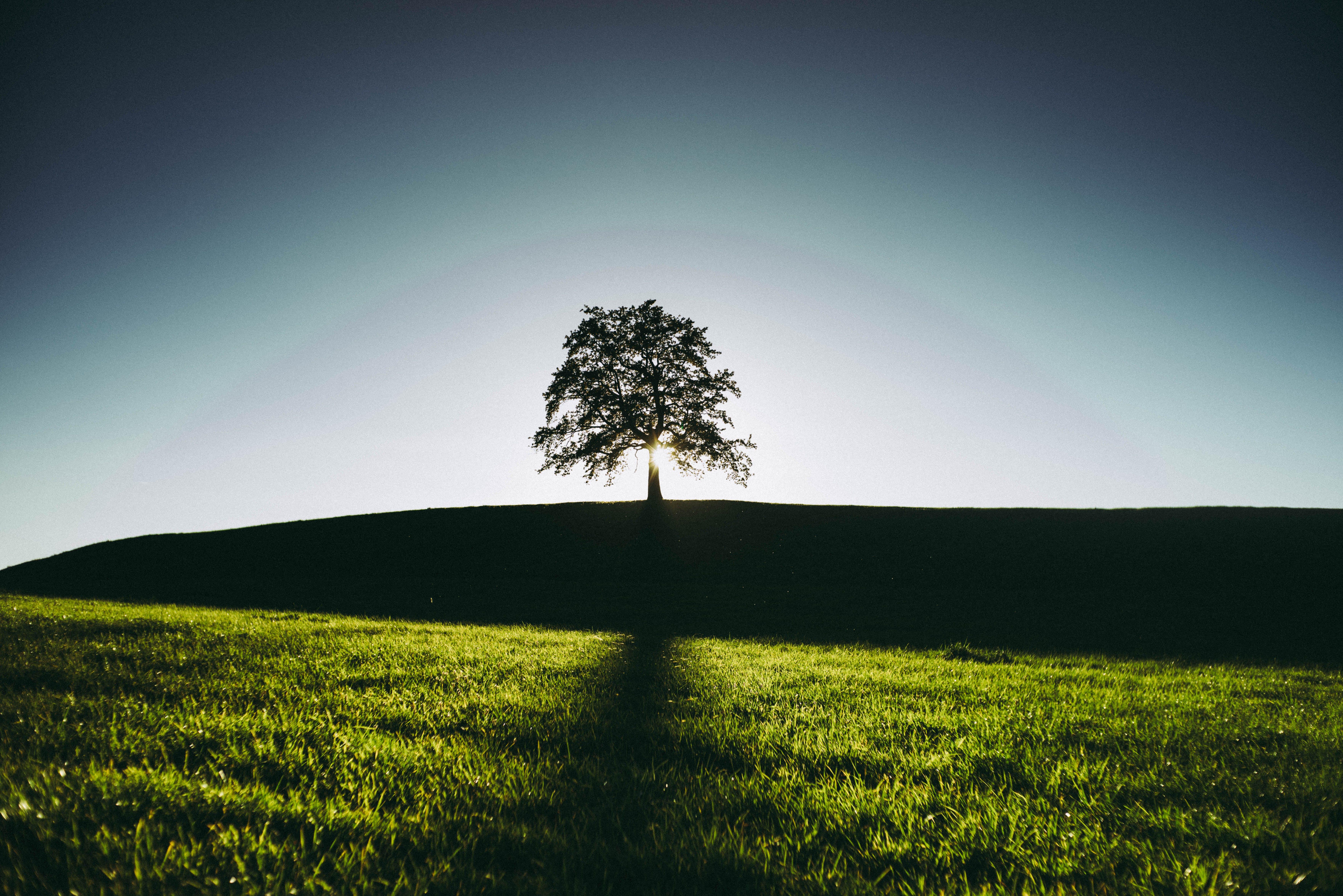 Foto profissional grátis de área, árvore, campina, cenário
