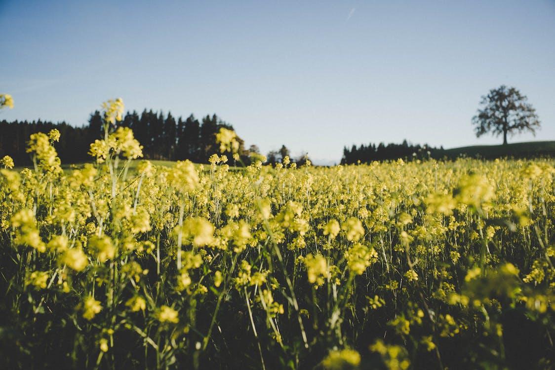 bane, blomster, blomstereng