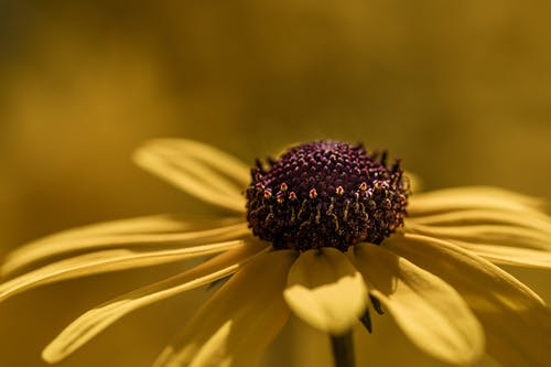 Blooming yellow flower in nature