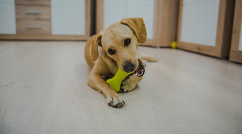 Безкоштовне стокове фото на тему «mia, малий, собака, собачка»
