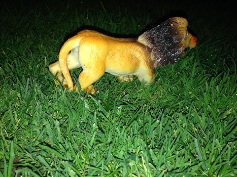 Free stock photo of animal, grass, lion, toy