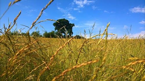 Fotobanka sbezplatnými fotkami na tému cereália, hracie pole, kmeň, obal