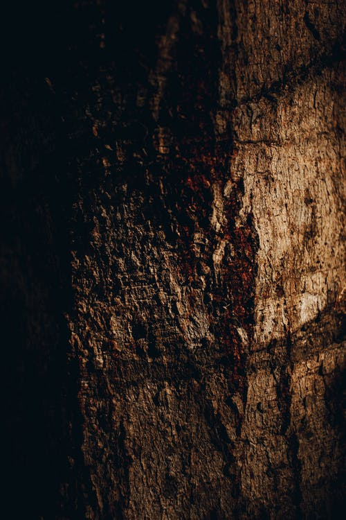 Free stock photo of bole, nature lover, trees