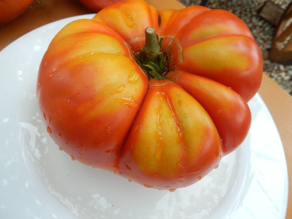 Free stock photo of tomato, village