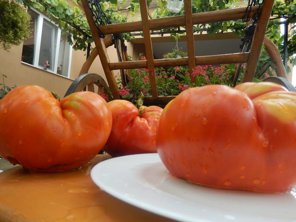 Free stock photo of tomatoes, village