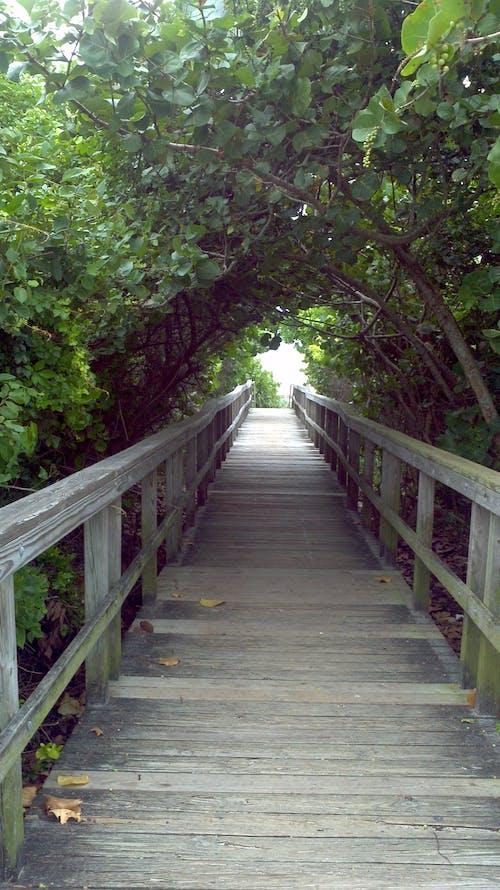 Δωρεάν στοκ φωτογραφιών με δέντρο σήραγγας, ηλιόλουστος, θαλασσινά σταφύλια, ξύλινος διάδρομος