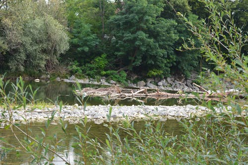 Free stock photo of river bank