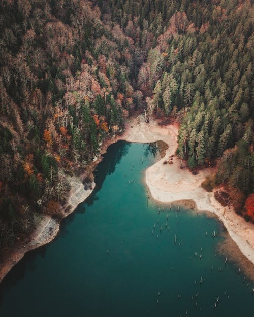Aerial View of Green Trees Beside Body of Water