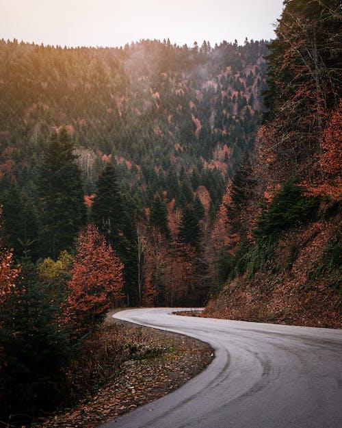 Gray Asphalt Road Between Green Trees
