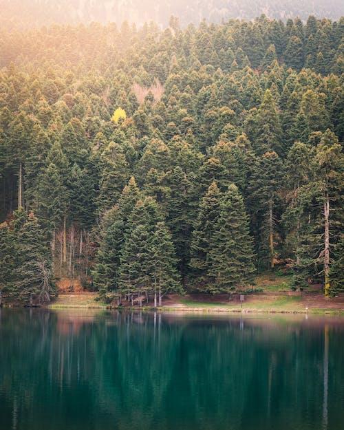 Green Trees Beside Lake