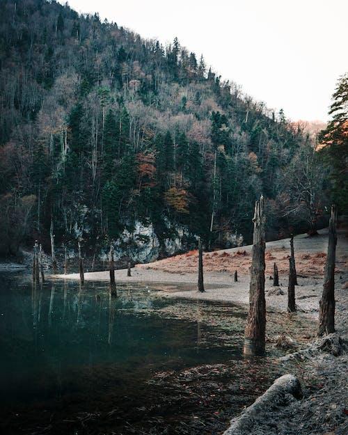 Brown Wooden Stick on Lake
