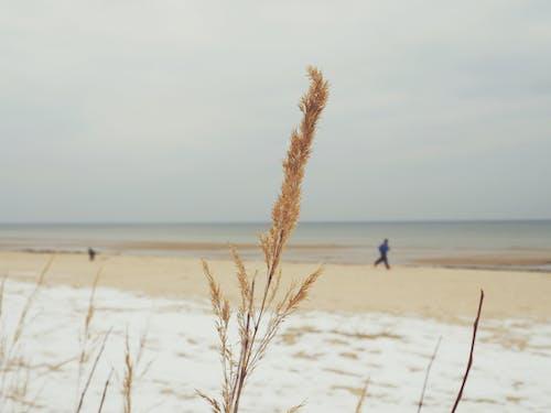 Gratis arkivbilde med anlegg, gress, kyst, sand