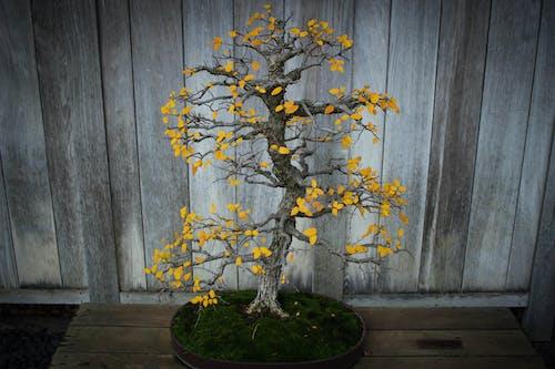 Yellow Flowers on Black Round Pot