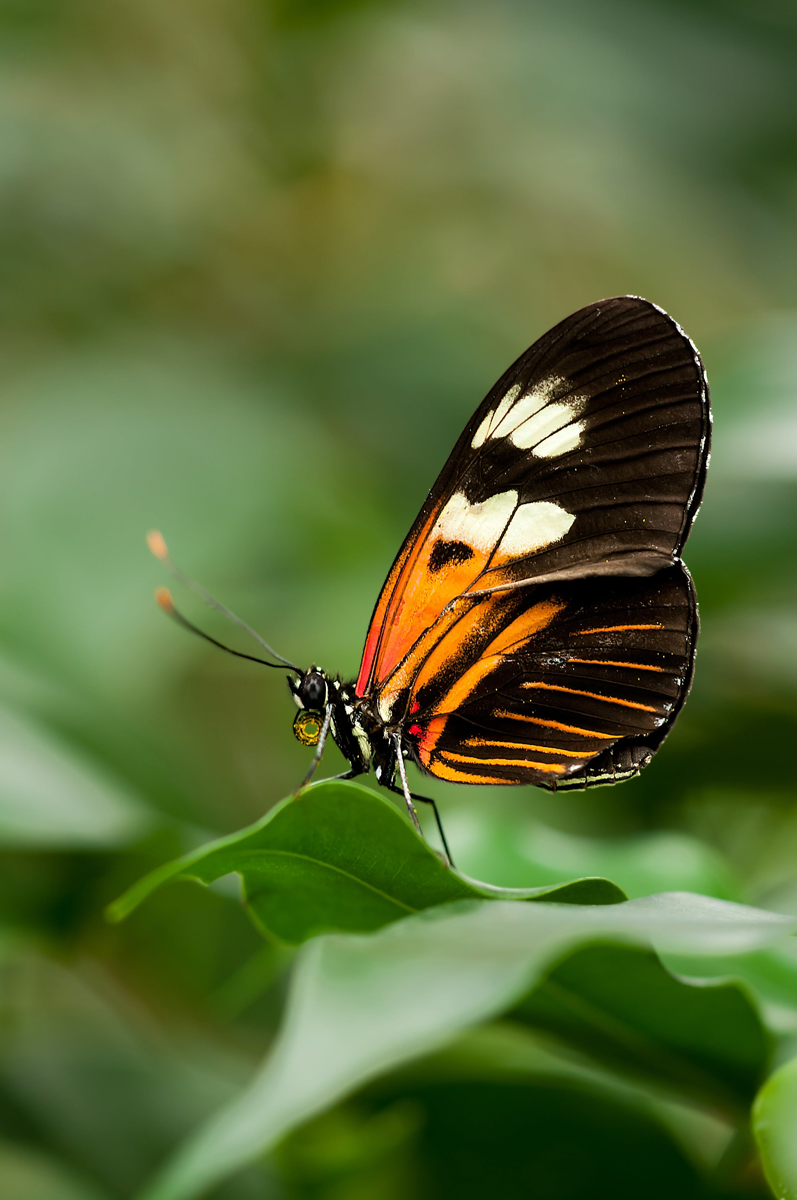 Orange White and Black Butterfly on Green Leaf
