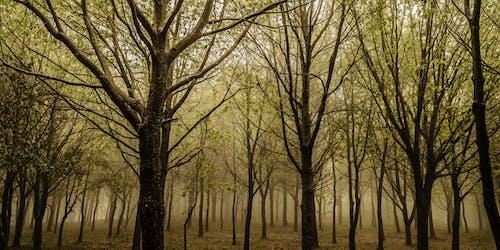 Free stock photo of Amarillo, bosque, campo