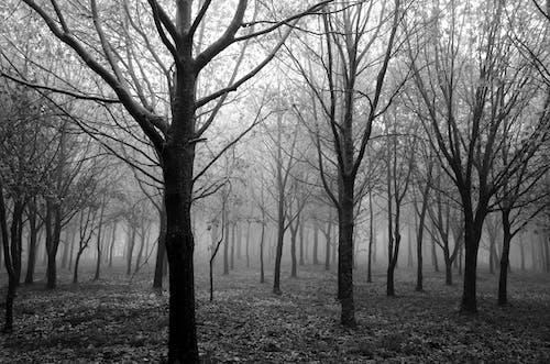 Foto stok gratis alam, berkabut, bidang