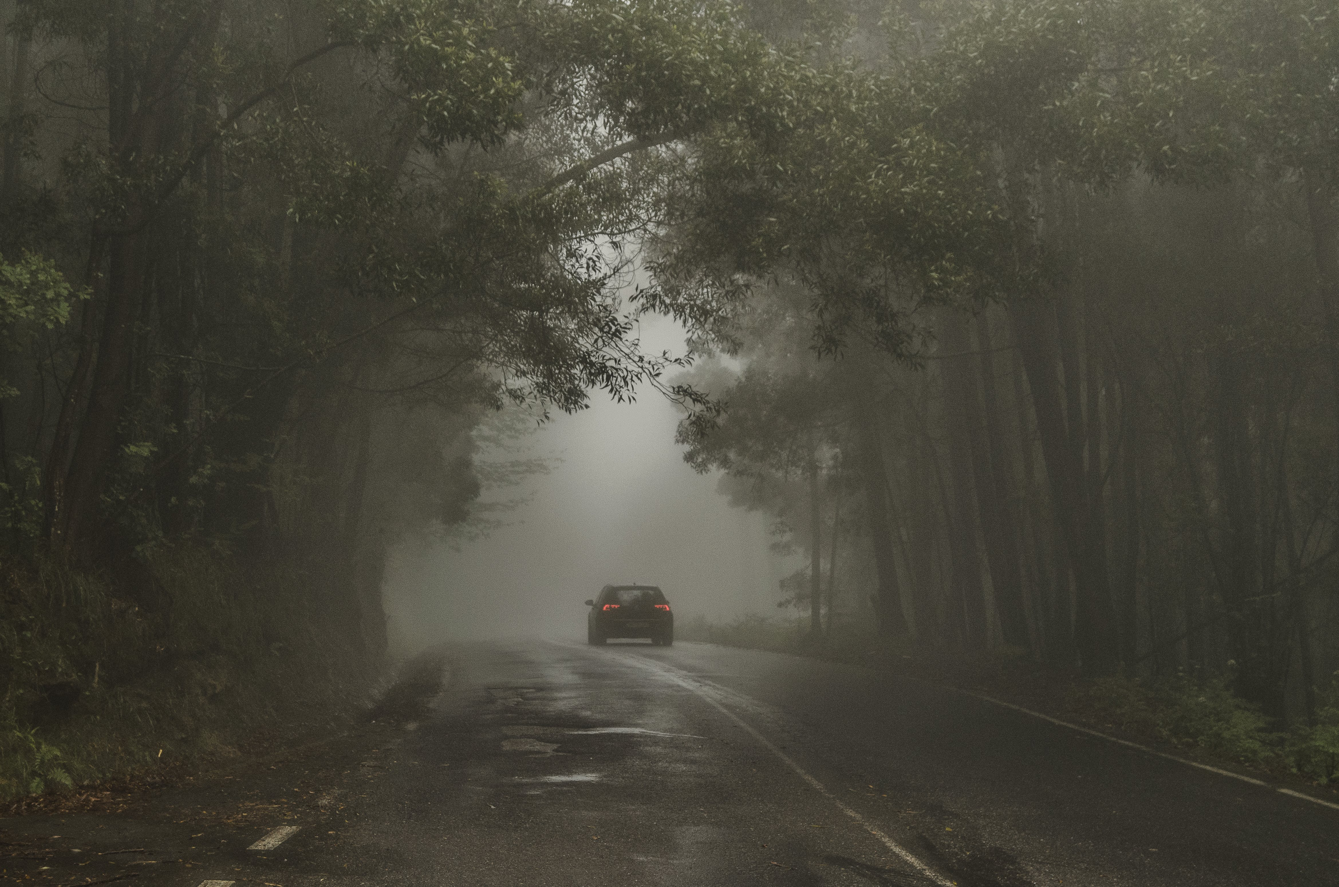 Car Passing on Road Between Trees